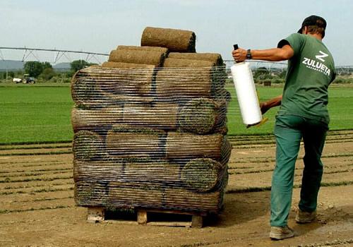 Rollo pequeño de tepe paletizado
