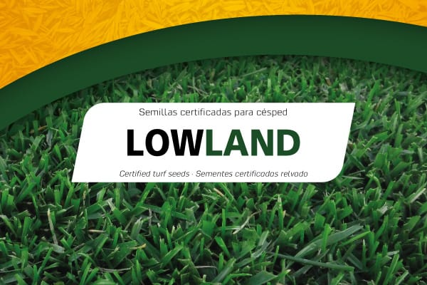Semillas Lowland Professional Mix