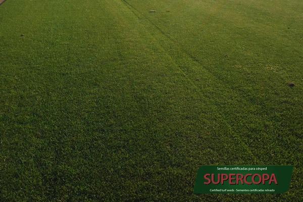 Mezcla de semillas para cesped Supercopa Semillas Zulueta