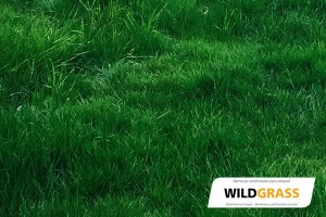 Mezcla de semillas para cesped Wildgrass