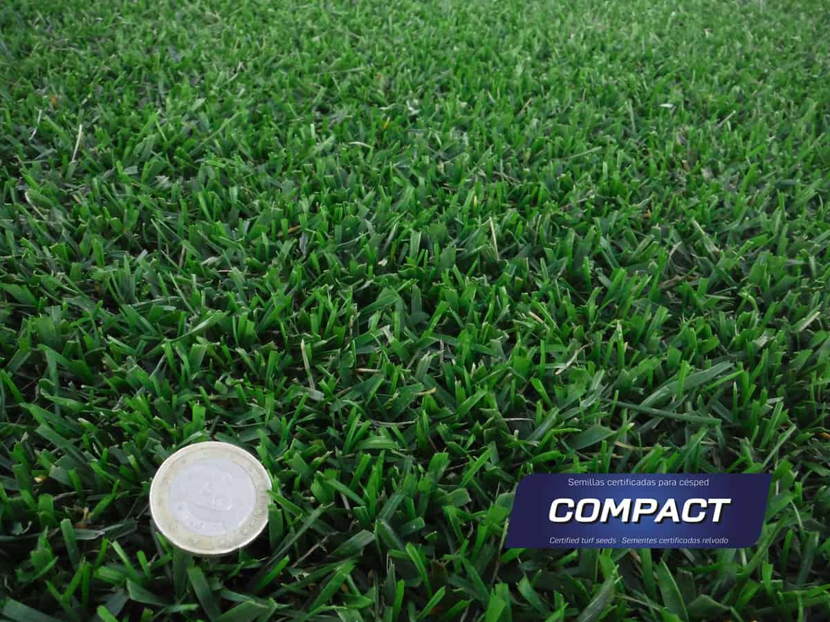Compact_Tepe_semillas