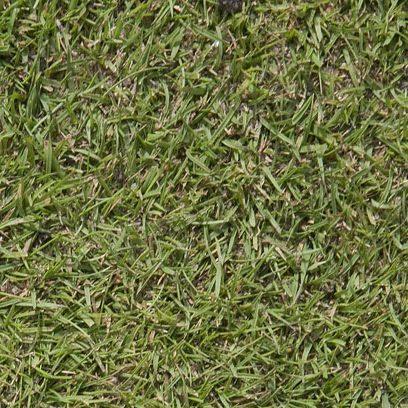Agrostis tenuis en mezcla