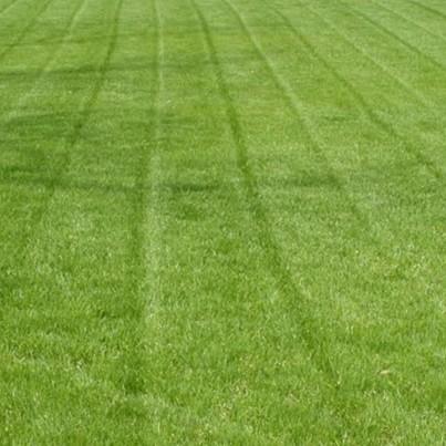 detalle-semillas-ray-grass-annual