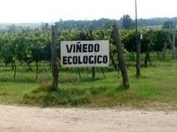 vinedo-ecologico