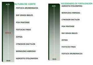 FERI_CORTE