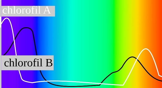 luz_clorofila