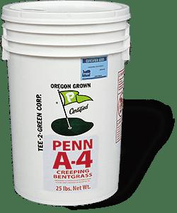 Agrostis Stolonifera A1