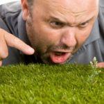 Mantenimiento del césped en verano. 10 Problemas frecuentes