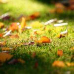 ¿Hasta cuando podemos sembrar césped en otoño?
