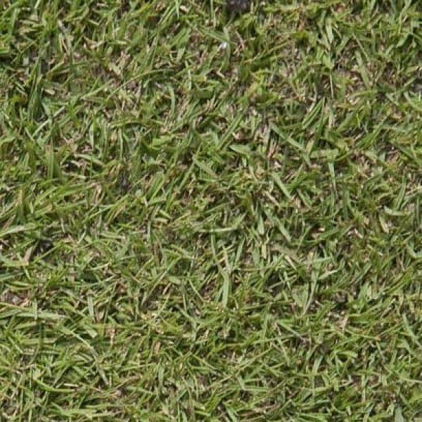 Agrostis-en-mezcla-408x408